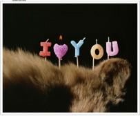 I Love You, 2010 Lightjet Print Ed/3 540 x 650mm